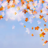 Autumn leaves with the blue sky. EPS 10 Royalty Free Stock Image