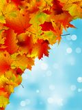 Autumn leaves on blue sky. EPS 8 Stock Images