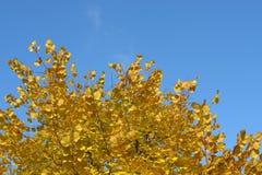Autumn leaves on blue sky Stock Photo