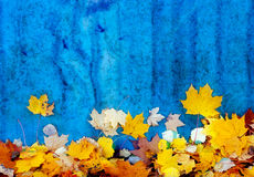 Autumn leaves at the blue wall Royalty Free Stock Photography