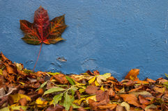 Autumn leaves on blue wall abstract Stock Images