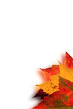 Autumn leaves blur Royalty Free Stock Photo