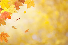 Autumn Leaves on Blurred Background Royalty Free Stock Photos