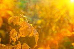 Autumn leaves on blurred illuminated background Royalty Free Stock Photography