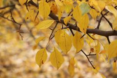Autumn leaves with blurred trees . stock image