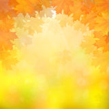 Autumn leaves on blurry background. Autumn maple leaves on blurry background with sun rays. Vector illustration Royalty Free Stock Photos