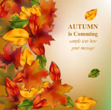 Autumn leaves on blurry background. Realistic Vector illustration banner or poster card. S Stock Illustration