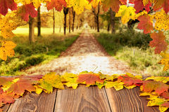 Autumn leaves on a board Stock Images