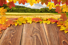Autumn leaves on a board Stock Image