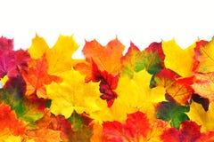 Autumn Leaves Border Fotografía de archivo libre de regalías