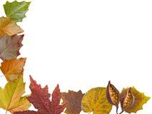Autumn leaves border Royalty Free Stock Image