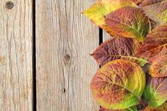 Autumn Leaves Border fotografia de stock