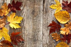 Autumn Leaves Border stockfotos