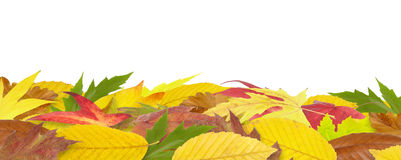 Autumn leaves border Royalty Free Stock Image