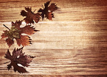 Autumn leaves border. Over natural wood background, old dry leaf shape, nature at fall Stock Images