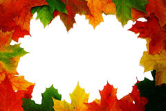 Autumn leaves border stock image