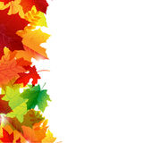 Autumn Leaves Border Stock Photo