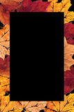 Autumn Leaves Border. Colorful leaf design that I created using natural leaves stock photos