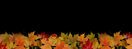 Autumn Leaves Border Stock Foto's
