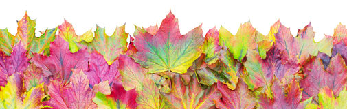 Autumn Leaves Border Lizenzfreies Stockbild