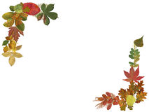 Autumn leaves border. Border with autumn theme with leaves Stock Photo