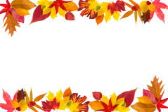 Autumn leaves border. Colorful border composed of multiple autumn leaves royalty free stock image