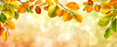 Autumn leaves border on bokeh background Royalty Free Stock Photos