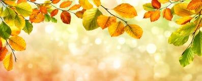 Autumn leaves border on bokeh background royalty free stock photos