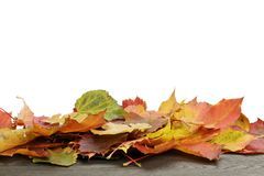 Autumn leaves for border composition Royalty Free Stock Images