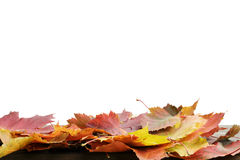 Autumn leaves for border composition Royalty Free Stock Photography