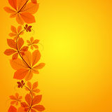 Autumn leaves border ornament Royalty Free Stock Images