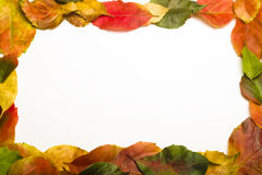 Autumn leaves border on white. Autumn colorful leaves border on white Stock Photography
