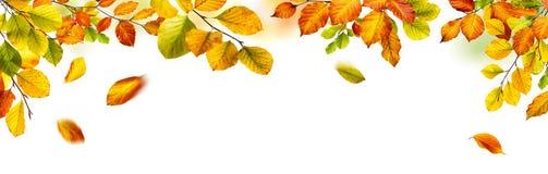 Autumn leaves border on white background
