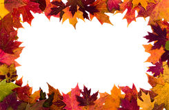 Autumn leaves border on white background Stock Photography