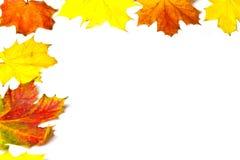 Autumn leaves border on white background. Colorful autumn leaves border on white background royalty free stock photos