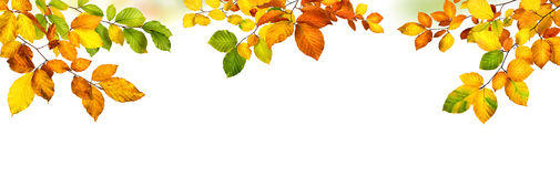Autumn leaves border on white background Royalty Free Stock Photos
