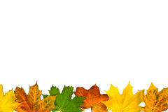 Autumn leaves border on white. Various color autumn leaves border Royalty Free Stock Image