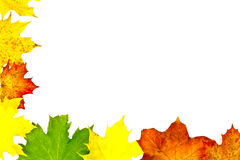 Autumn leaves border on white. Various color autumn leaves border Stock Photo