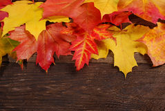 Autumn leaves border on wooden background Stock Image