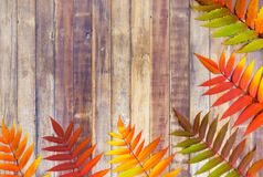 Autumn Leaves Border on Wooden Background Royalty Free Stock Photography
