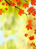 Autumn leaves border for your text. royalty free illustration