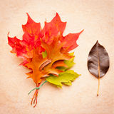 Autumn leaves bouquet on stone background Royalty Free Stock Image