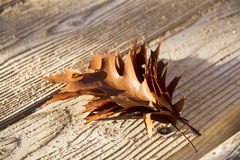 Autumn leaves bouquet on a wooden background. Royalty Free Stock Photos