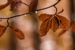 Autumn, Leaves, Branch Royalty Free Stock Photo