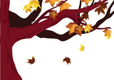Autumn leaves and branches Royalty Free Stock Photo