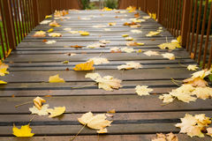 Autumn  leaves on a bridge Royalty Free Stock Image