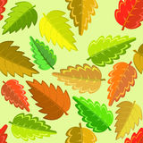 Autumn leaves. Bright autumn pattern with green, yellow, brown and red leaves Stock Photography