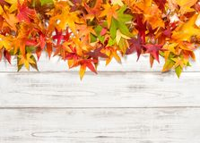 Autumn leaves bright wooden background. Autumn leaves on bright wooden background. Yellow, red, green leaf Stock Photography