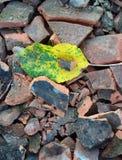 autumn leaves on broken roof tiles Stock Photo