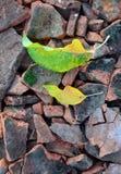 autumn leaves on broken roof tiles Stock Image